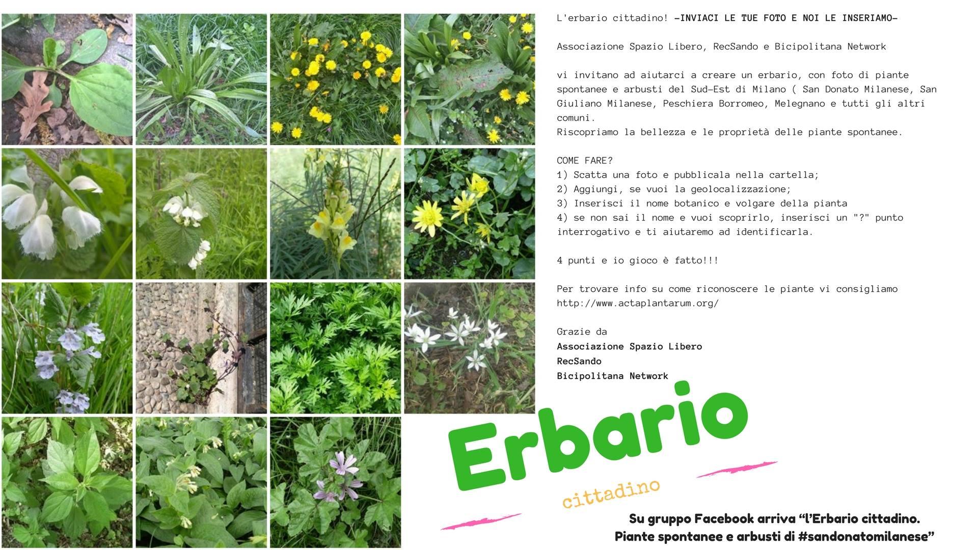 03046_erbario