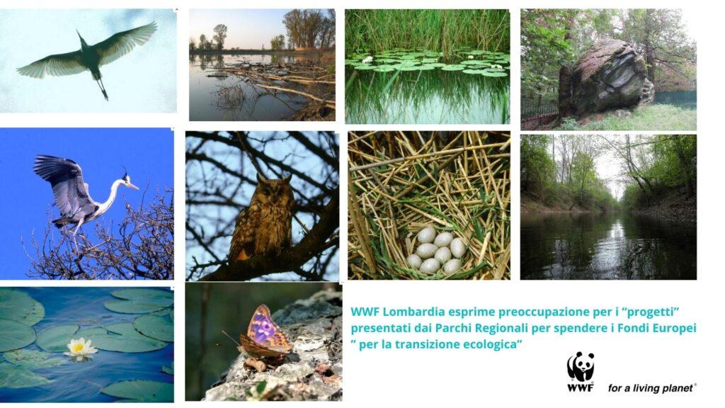 WWFLOMBARDIA_transizione_ecologica