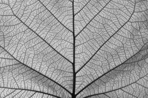 una intelligenza connettiva di fiorello cortiana